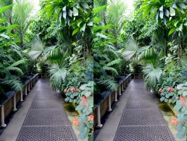 In Another Aisle Of The Palm House At Kew by aegiandyad