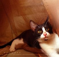 Cats and Curtains 03 by ariellemika12