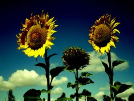GIRAsoles. by everyfluor