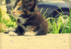 New Kitten by Caven412