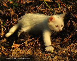 big white cat for a walk by Mari-Ghostly