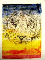 Tiger etching by katynom