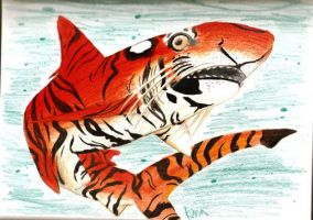 TIGER shark APA by Ama-Encyclopika