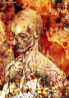 Anatomy of Man by ModestlyDefiant