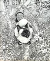 Siamese Cat Commission by Nazzirithe