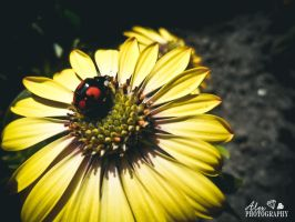 Black Lady Beetle with Red Dots by Muggi93