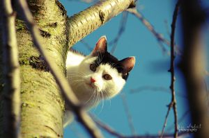 cat in the treeII by seasfairytale