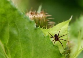 SPIDER by nawphotos