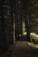 Forest Trail by CristaliaART