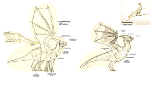 Tarkaria: How to tell Dragons apart from Wyverns by vcubestudios