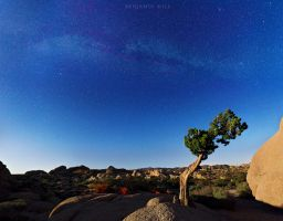 Joshua Tree by benkhill