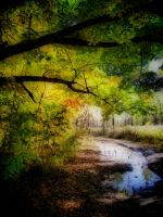 Colors of fall 2 by JezyCarole