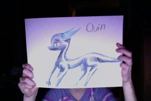 Quin by QuestionTheDragon