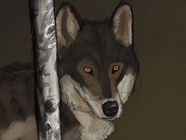 Wolf study Thing by Narhwhal