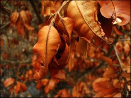 Leaves of Burnt Orange by x-Katus-x