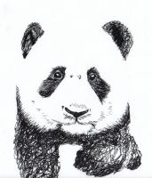 Panda Sketch by jaredjonhowell