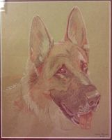 Pet Portrait: Wilson the German Shepherd by SeraphSisters