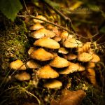 Mushrooms by TammyPhotography