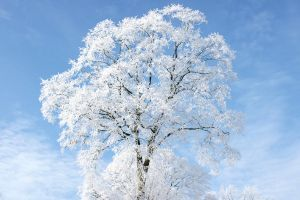White tree by felixiss