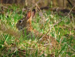 A March Hare by LovingLivingLife