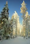 magic winter forest by KariLiimatainen