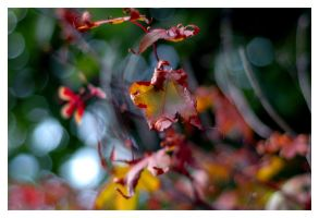 Curled Autumn Leaves. by DRXIV