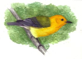 Prothonotary Warbler by Skyelar