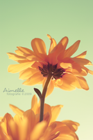 petali _ retro by Aimelle