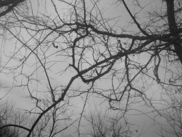 Winter branches by DeceptiveBeauty