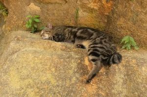 Snoozing trailcat by tarynsgate