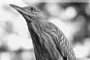 Portrait of a Bird by amaliabastos