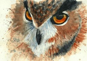 Owl by Medhi