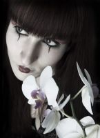 white orchid by silent-order