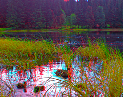 Ducklings 3D Anaglyph Stereoscopy by zour