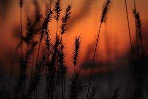 Grasses in the Flames 4 by UnderTheWildMoon