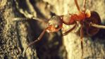 Ant by antarialus