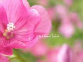 Summer Dreaming VI by 8SwanHeart8