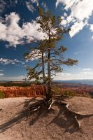 Solitary Tree Bryce Canyon by Wyco
