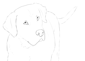 Beautiful Doggy by Puccoon