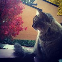 A pic of my cat :D by Flamestar21