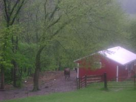 Horses in the rain by Karie-Pyre