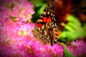 Butterfly on flower by elphabaevitaeponine