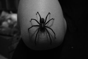 Spider by Rose-Kira