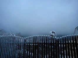 Frozen fence by i-love-pizza
