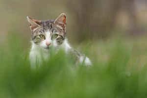 On the prowl by luka567
