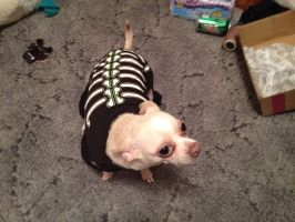 My Dog Wearing a Halloween Costume by iloveemos2