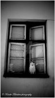 . Cat in Window I . by KimikoTakeshita