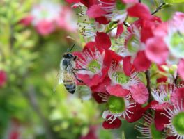 Bees 4 by Coraloralyn