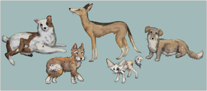 House Fox Diversity by Sheather888