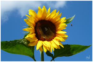 Bees Love Sunflowers by Ayshel